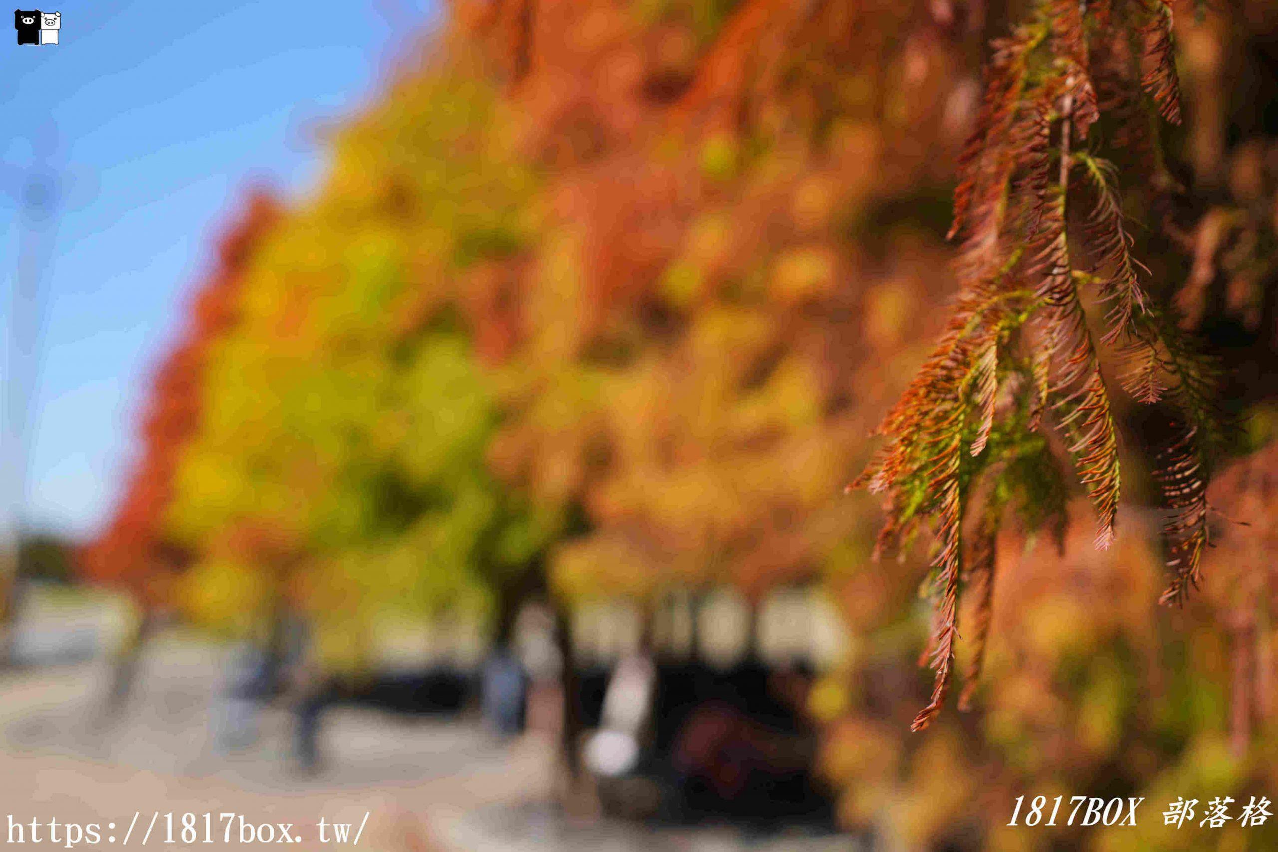 【台南。六甲】落羽松森林。漸層繽紛。彷彿走進明信片風景裡 @1817BOX部落格