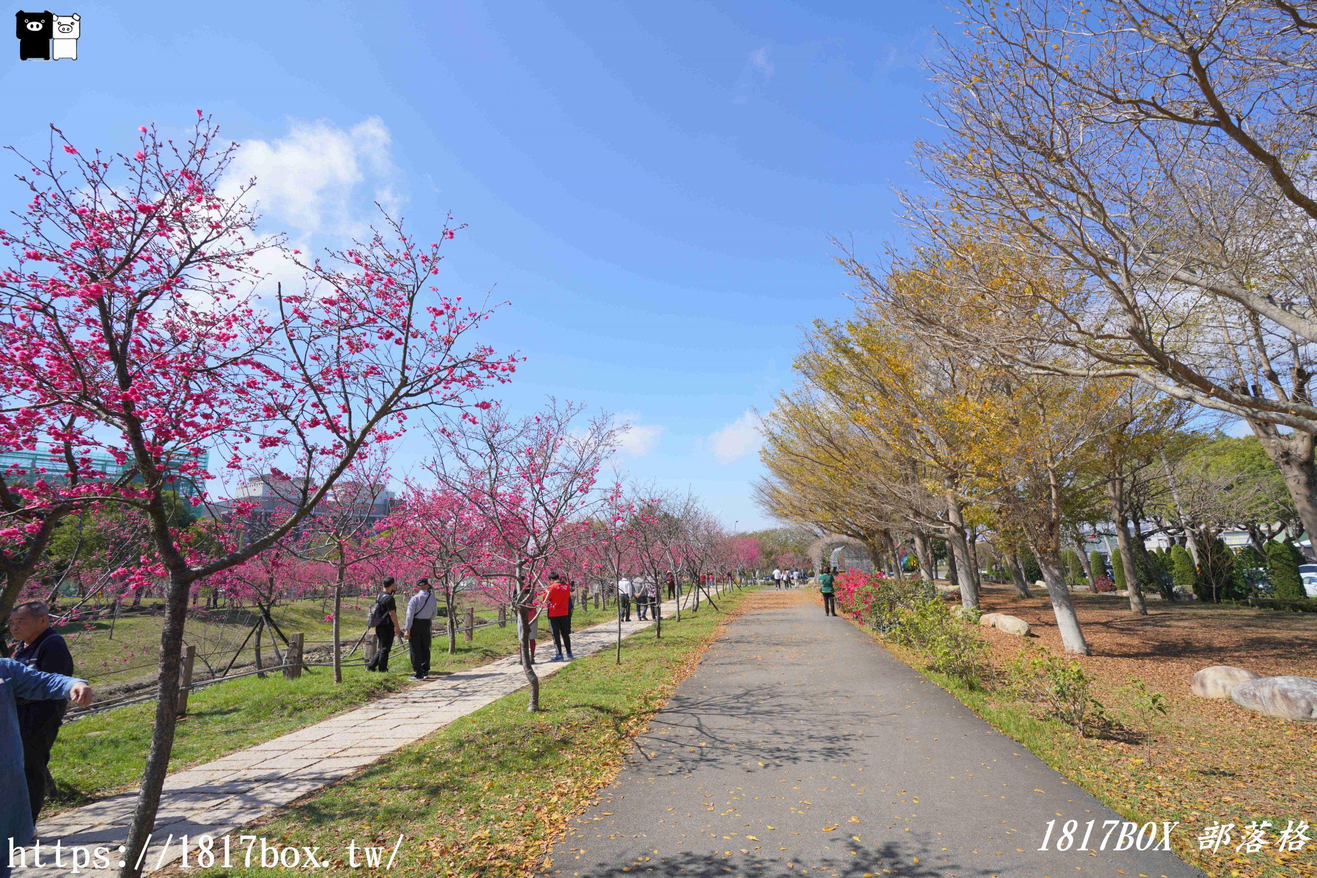 【台中。后里】中科崴立櫻花公園。粉色花海。櫻花盛開 @1817BOX部落格