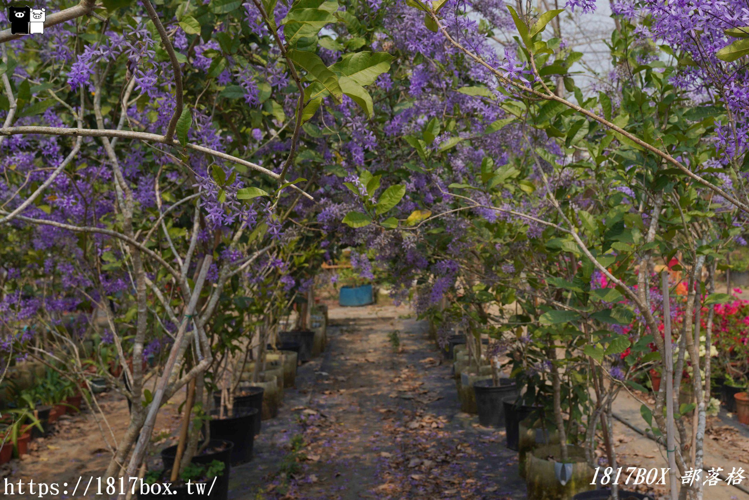 【台南。玉井】雙秀園。錫葉藤紫花隧道。各式奇花異草。免費景點 @1817BOX部落格