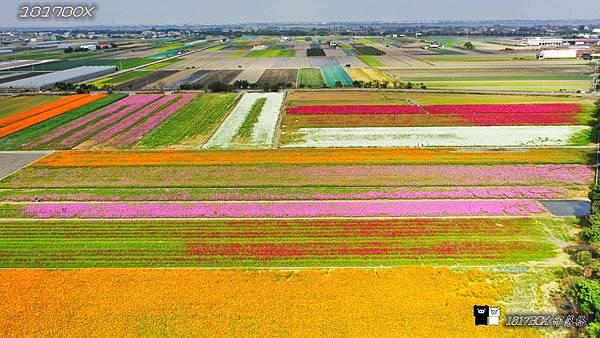 【雲林。莿桐】 30公頃彩色花毯。莿桐孩沙里雲林花海。全國十大花海之一 @1817BOX部落格
